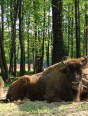 Atrakcje dla dzieci Śląsk
